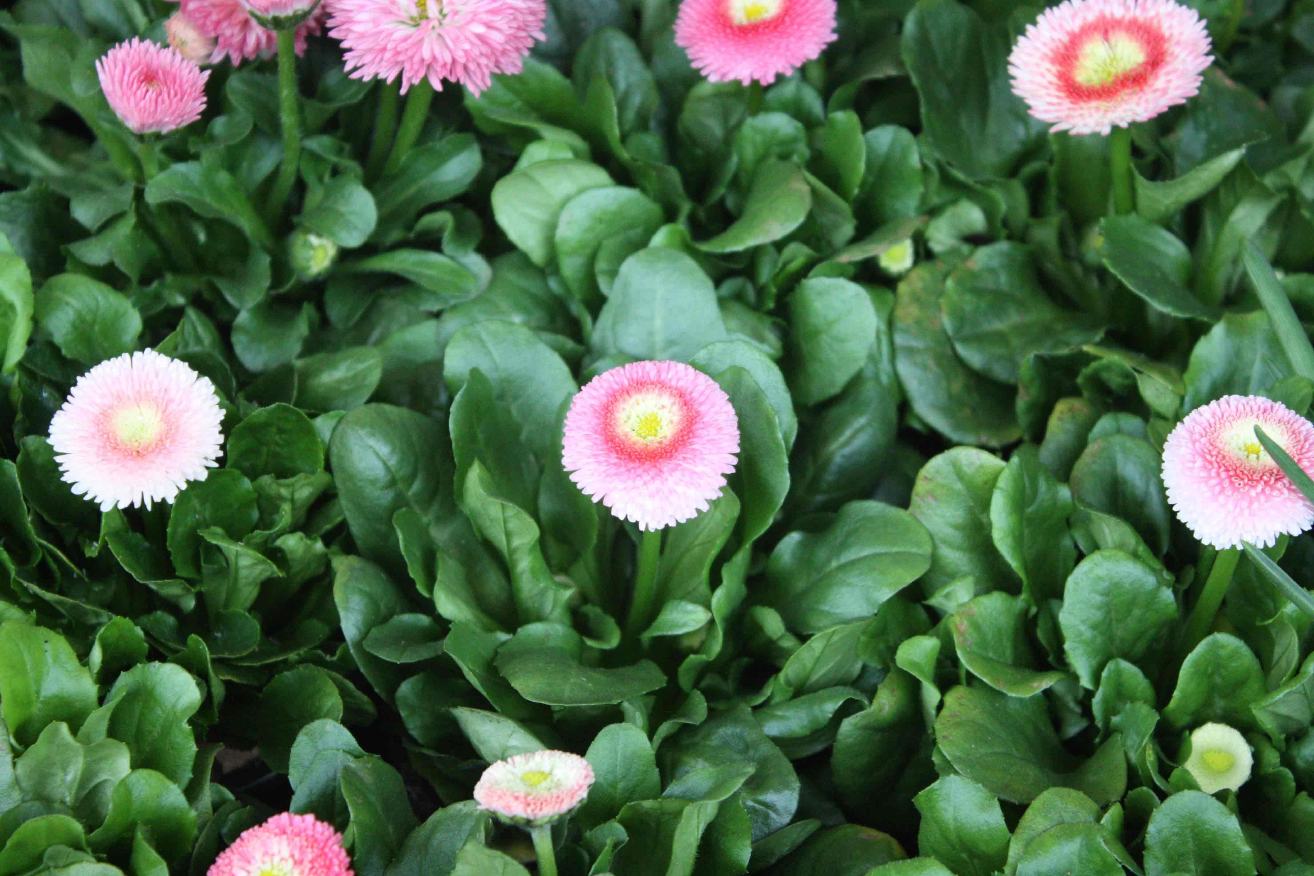 Im Frühjahr, Sommer Und Herbst Halten Wir Ein Großes Angebot An Garten  Und  Balkonpflanzen Für Sie Bereit. Auf Wunsch Bepflanzen Wir Auch Gerne Ihre  Eigenen ...